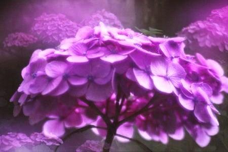 20110701_noririn.jpg