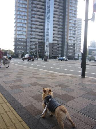 とうさん散歩IMG_7403 - コピー