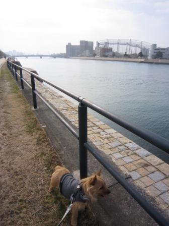 とうさん散歩IMG_7415 - コピー