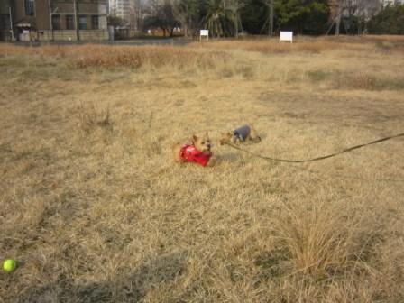 草むらチャッピーIMG_7475 - コピー
