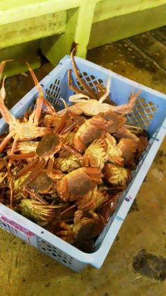 加能蟹と毛蟹