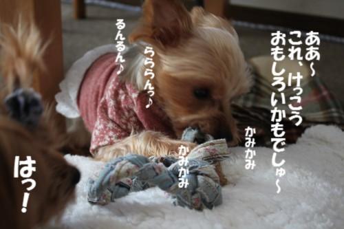 IMG_2094_20131130194738ed8.jpg