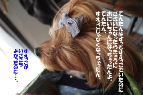 IMG_2285_2013120621101934d.jpg