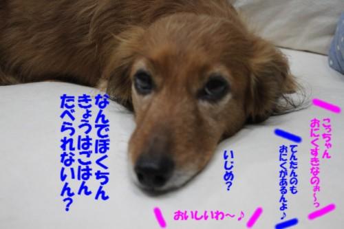 IMG_2684_20131222094821c20.jpg