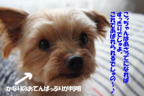 IMG_2692_20131223133013718.jpg