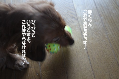 IMG_2734.jpg