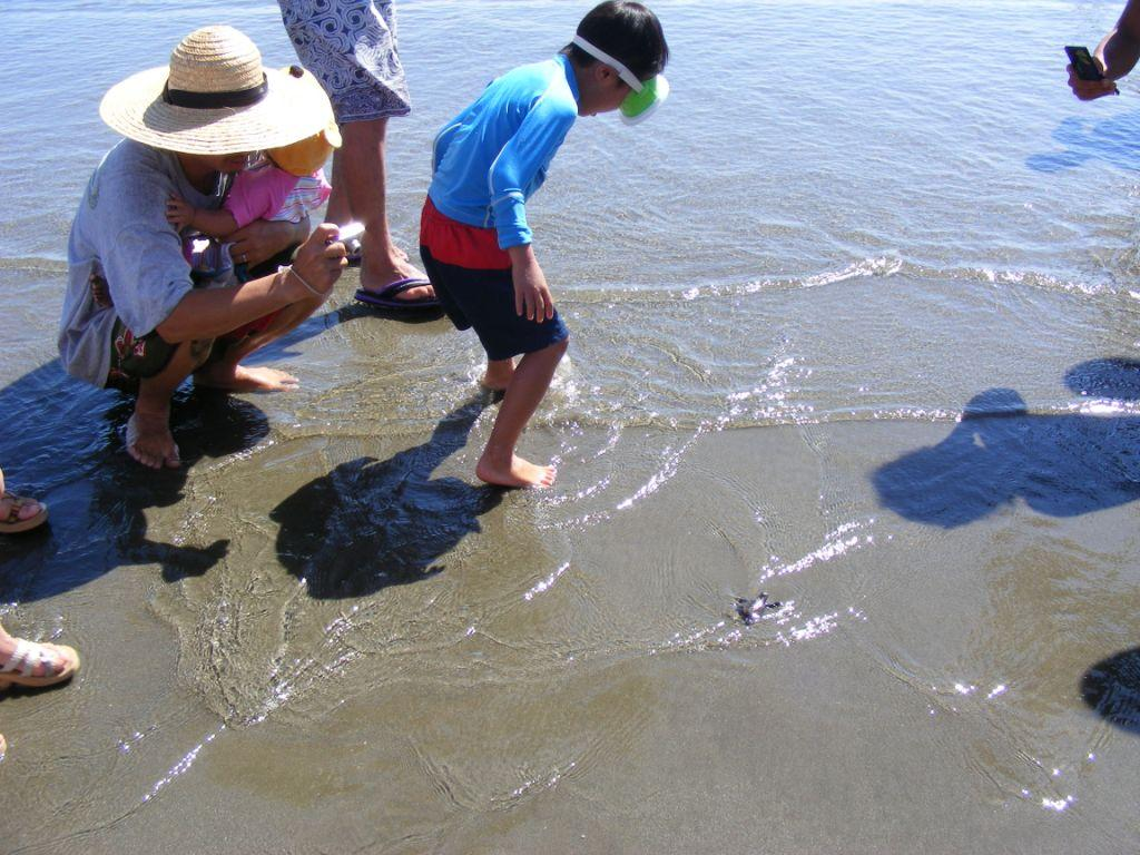 2008年ウミガメ放流2