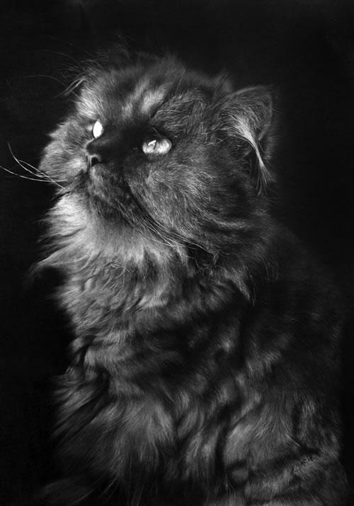 鉛筆アート猫