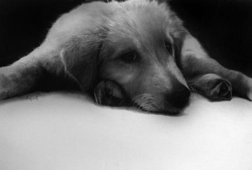 鉛筆アート犬