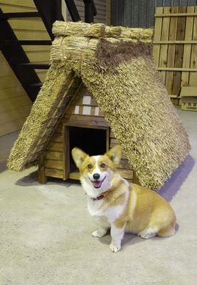 縄文時代の犬小屋