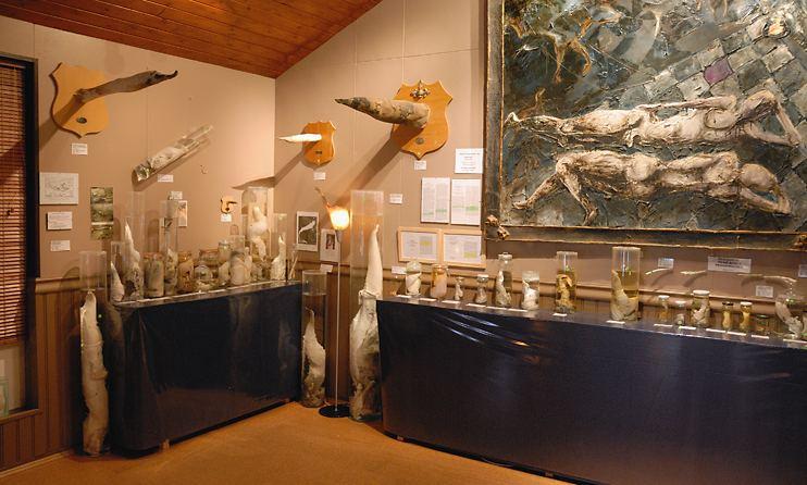 ペニス博物館