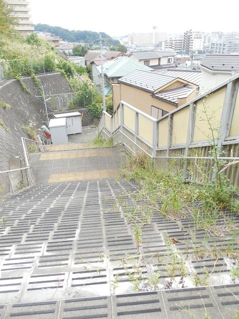 草はやしすぎな階段b