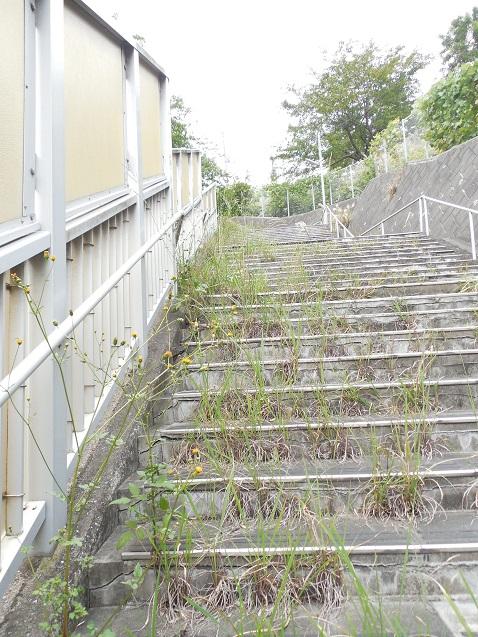 草はやしすぎな階段a
