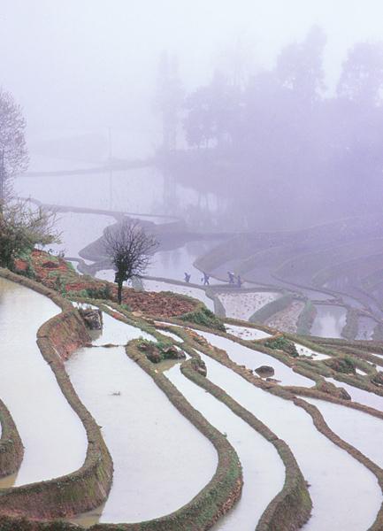 04雨霧の棚田