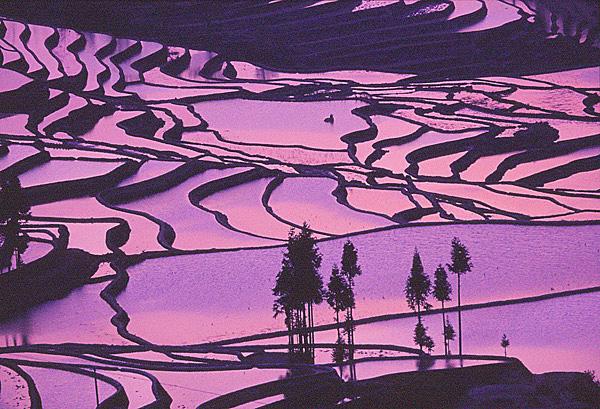 06紫色の棚田