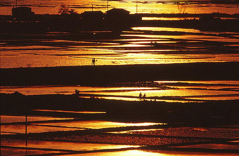10夕陽の帰路
