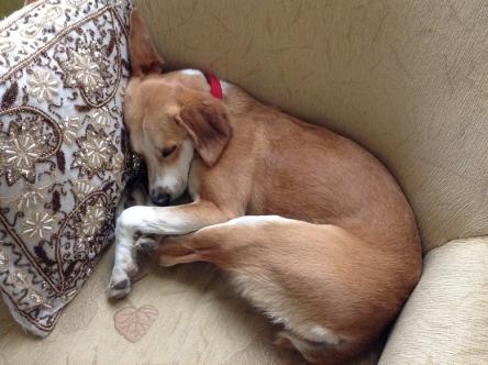 足が長いので寝るのも難しそうなジューン子