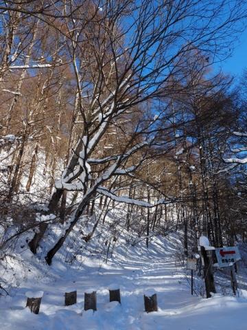 森入口141218