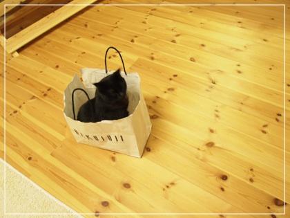 黒猫in紙袋