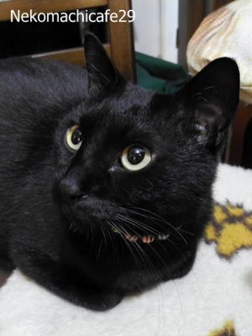黒猫風ちゃん