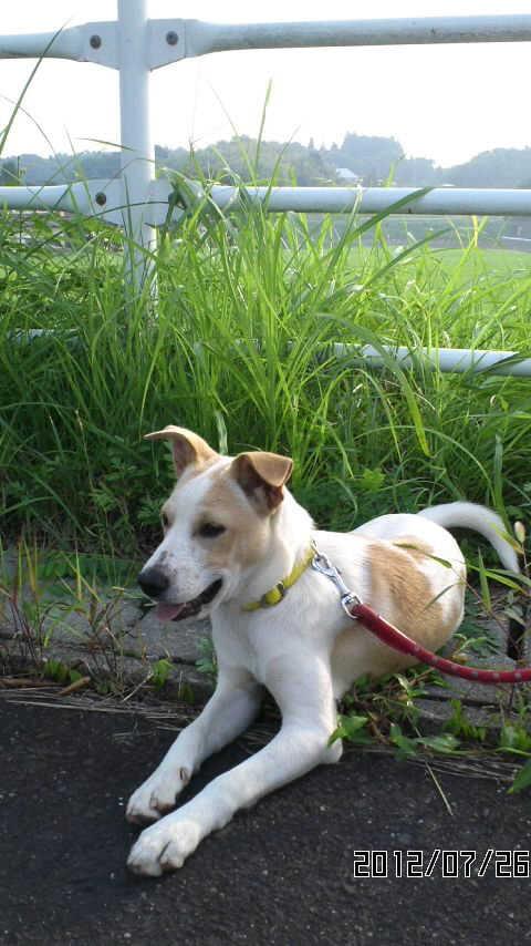 犬-116リキ