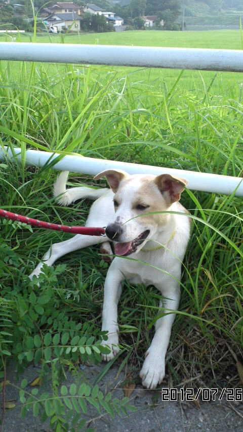 犬-116リキ2