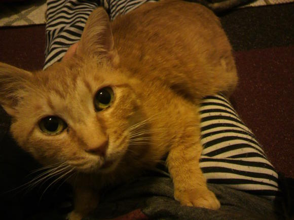 cat119_7_20120906221459.jpg