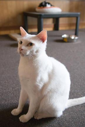 cat134-6.jpg