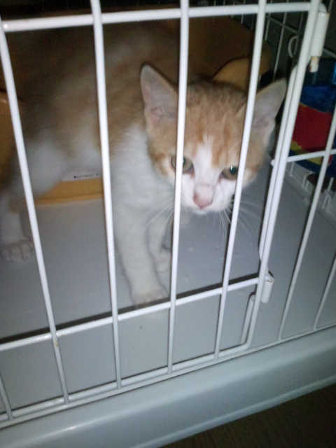cat211-1.jpg