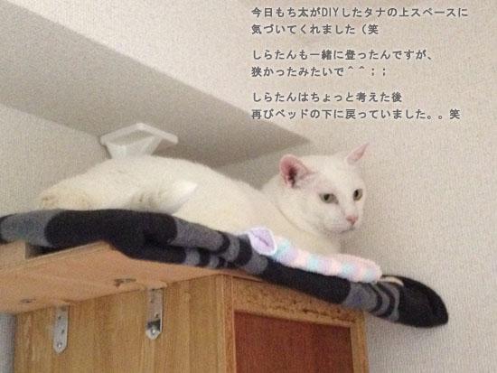 さしみ&るん4