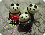 panda-maru.jpg