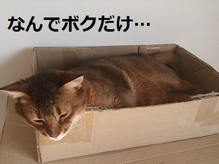 20131231154158acf.jpg