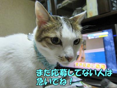 111217-05.jpg