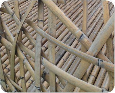 碧湖織屋竹