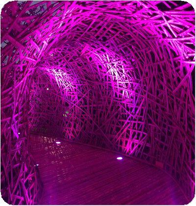 碧湖織屋廊下紫