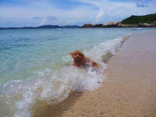 沖縄の海とトイプー