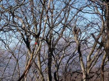 141122桜堂山 (3)s