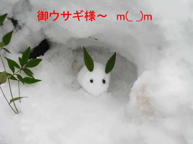 御ウサギ様