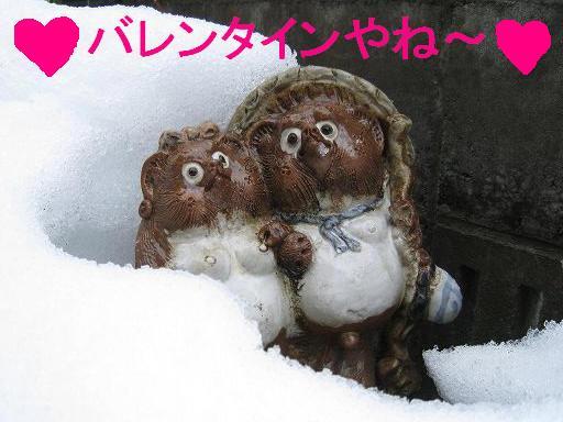 タヌキ夫婦