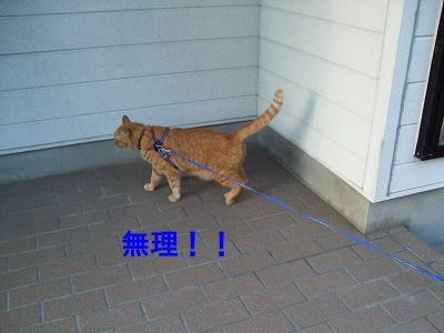 2010_09120019.jpg