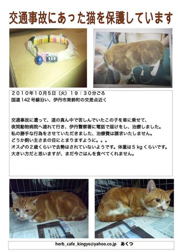 neko_sagashi101013.jpg