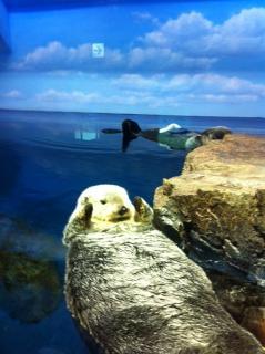 サンシャイン水族館13