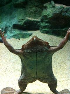 サンシャイン水族館12