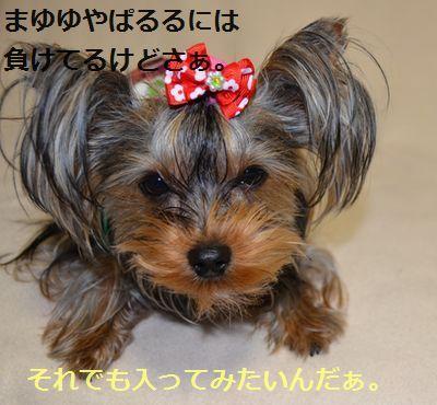 DSC_0361_20140129015003406.jpg