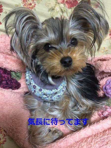 IMG_2951.jpg