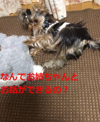 IMG_3182.jpg