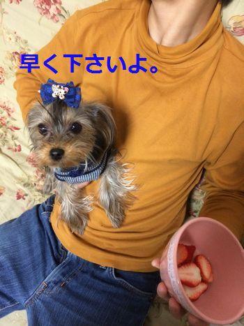 IMG_3343.jpg