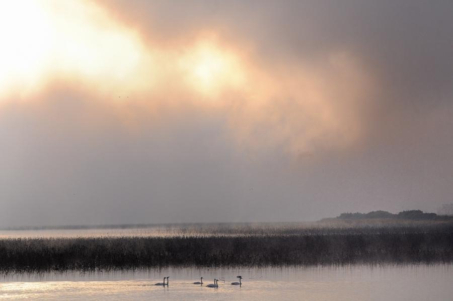 霧の変奏2
