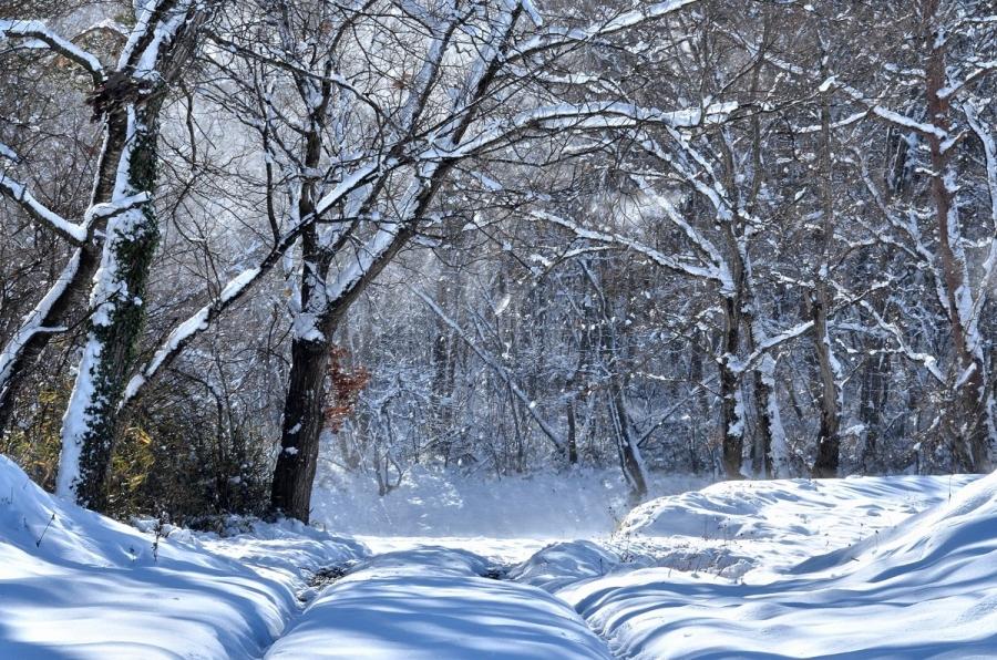 雪の日曜 177s