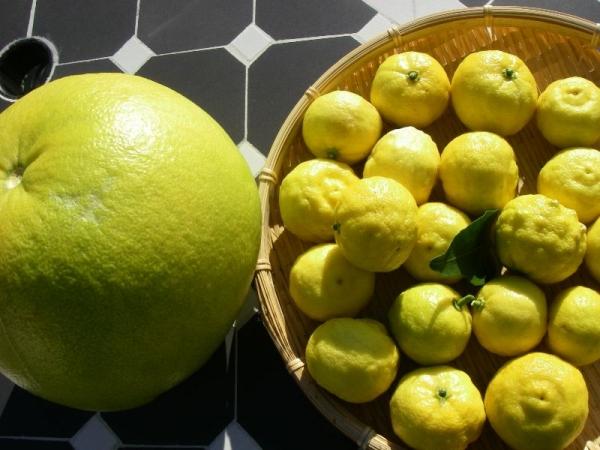 s131214ザボン:柚子